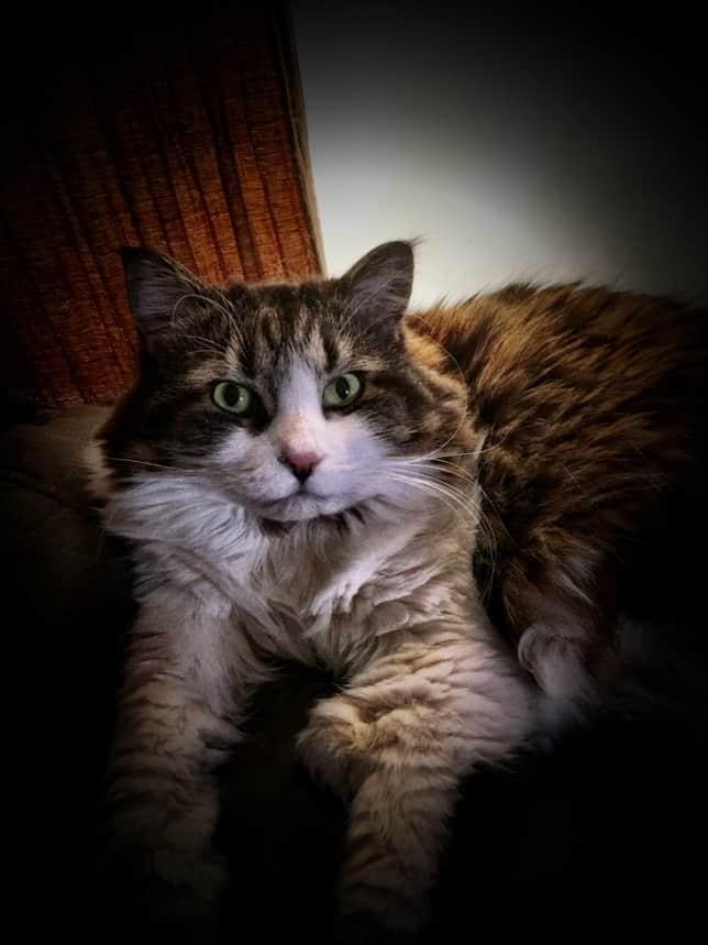 Matilda | AKA Tilly, Fluffy